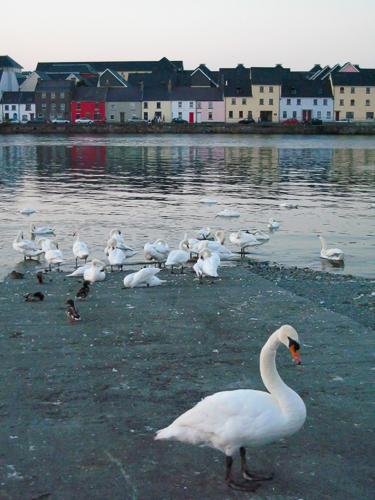 paysage irlandais