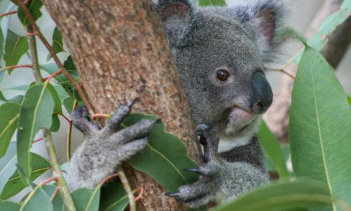 Australie : De Townsville à Hervey Bay