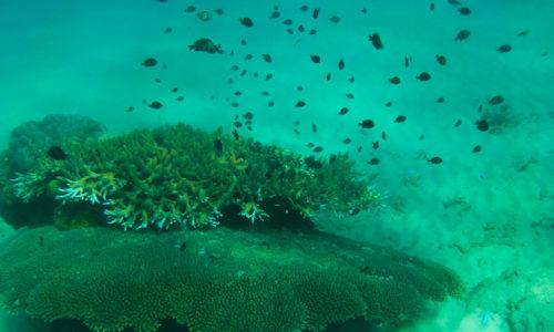 Malaisie : Les îles Perenthian, ou la découverte du monde sous-marin