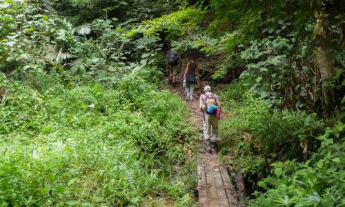 Malaisie : Taman Negara, jungle malaise