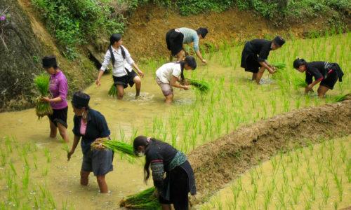 Vietnam : Sapa, ou la vie H'mong